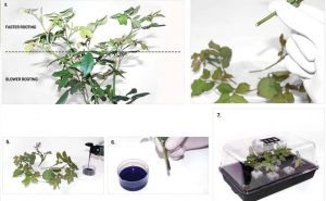 Cuttings: An easy to follow foolproof approach to taking cuttings – Hydromag